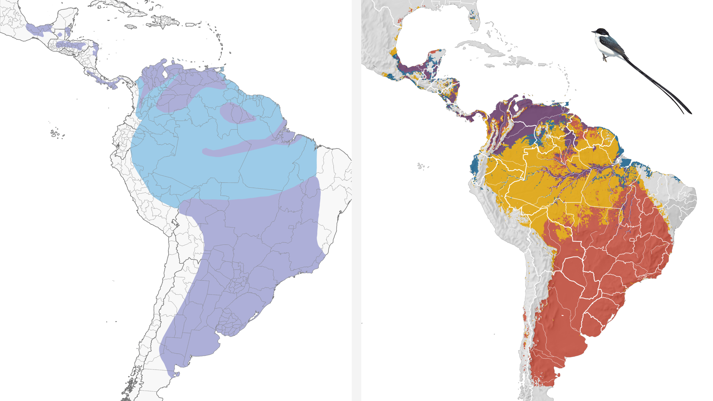 Side-by-side comparison of old and new Fork-tailed Flycatcher range maps